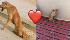 A Saudi Resident Saved A Dying Dog And It Is The Most Heartwarming News You Will Hear Today